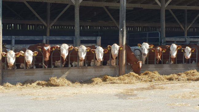 Ryhmittelymoduulilla voit jakaa eläimiä ryhmiin itse määrittelemiesi tietojen perusteella.