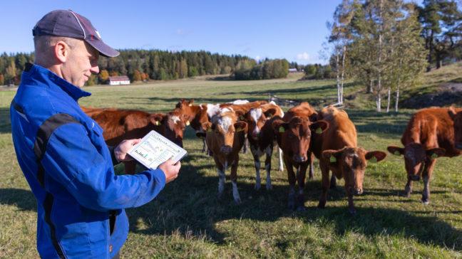 Minun Maatilani -nautaohjelmistossa voit koota tilasi tuotantosuuntaan sopivimman ohjelmakokonaisuuden.
