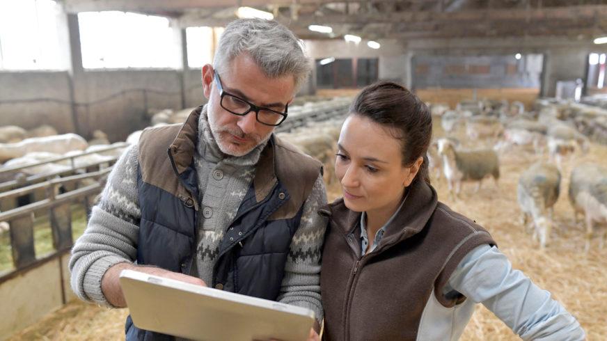 WebLammas on ohjelmisto mm. eläinrekisterin tietojen ylläpitoon.