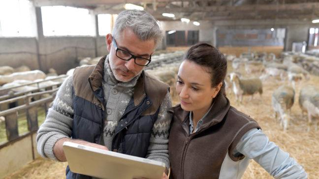 WebLammas är en webbapplikation för att upprätthålla uppgifterna om gårdens djur.