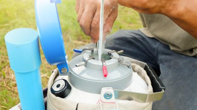 Faba Avelsvärden för mjölkraser och egenseminering